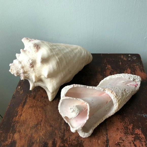 VINTAGE CONCH SEASHELL PAIR WHITE SHABBY BED BATH